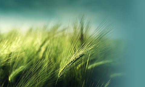 Green Healing